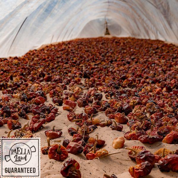 piments niora séchée sur les dunes de Guardamar